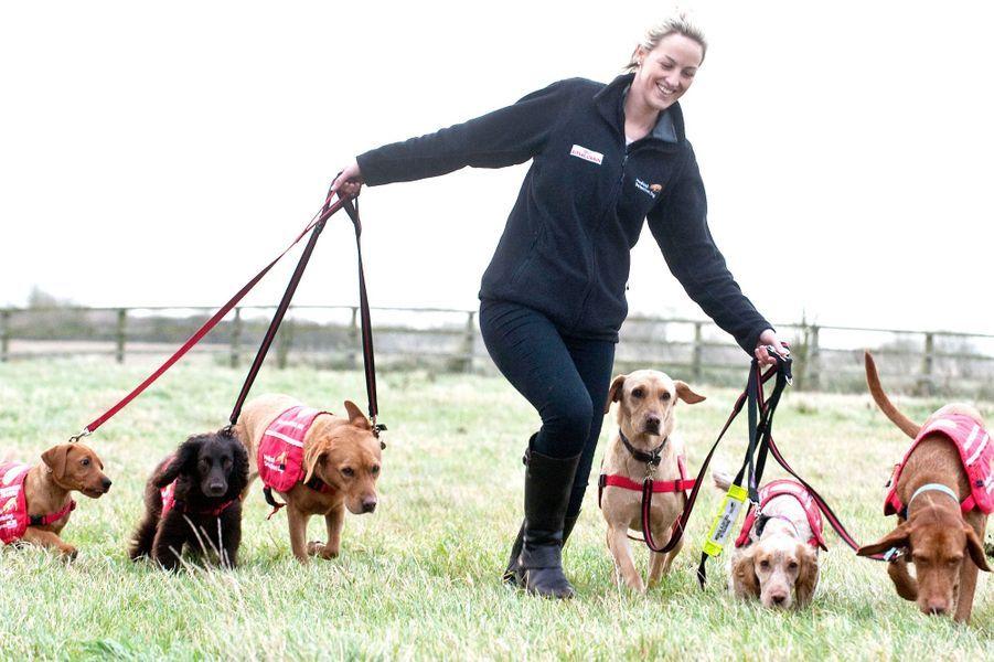 Les chiens détecteurs de cancer à l'entraînement