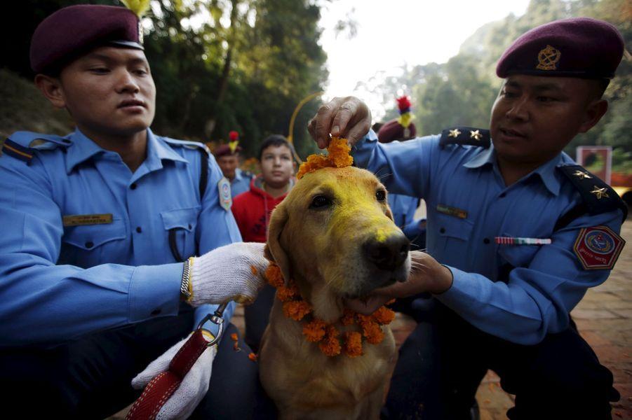 Les chiens policiers mis à l'honneur à Katmandou, au Népal