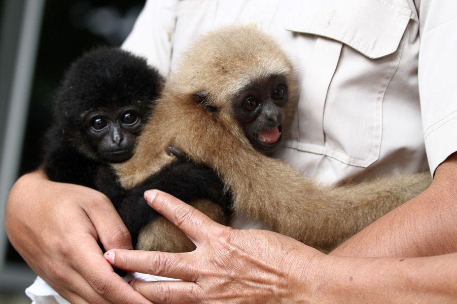 Les deux petits primates retrouveront bientôt la liberté