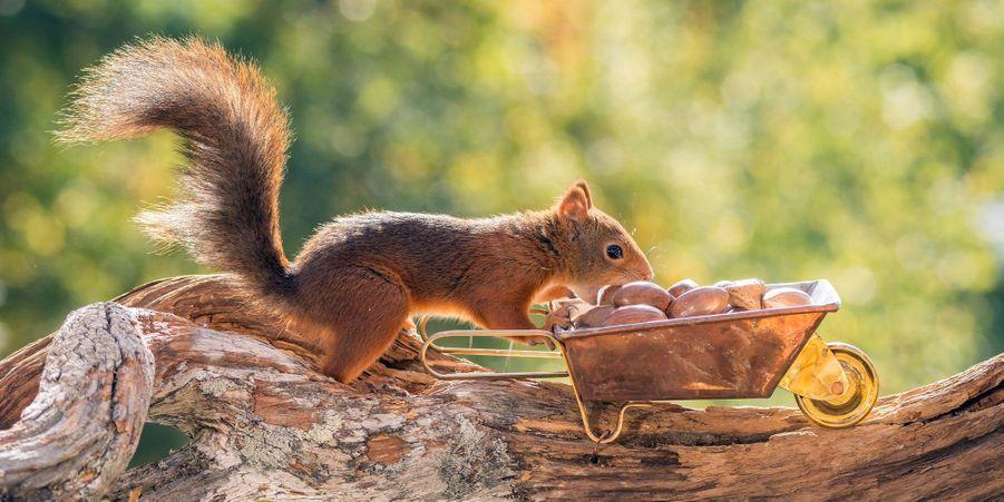 Les emplettes de l'écureuil