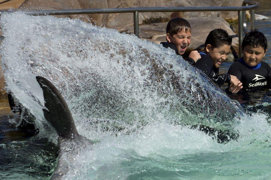 Les enfants malades s'amusent avec les dauphins à SeaWorld