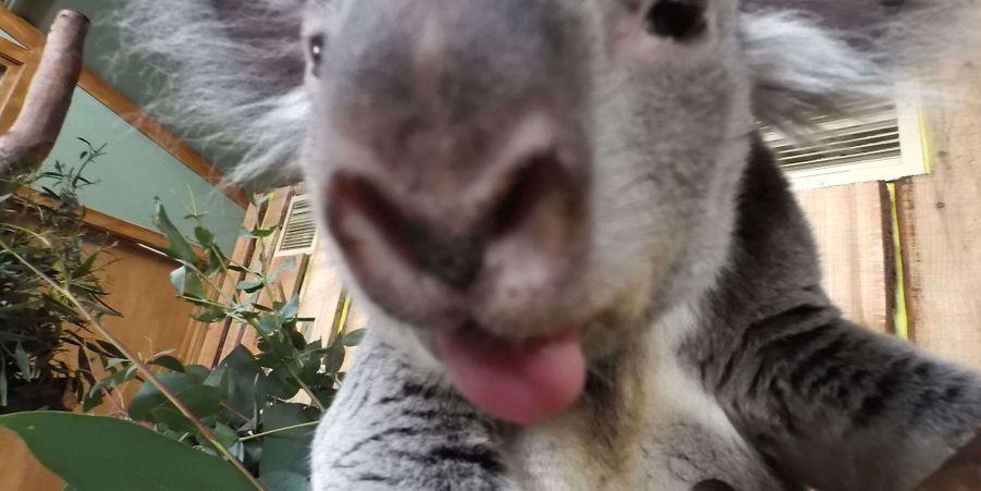 Les animaux du zoo d'Edimbourg posent pour des selfies