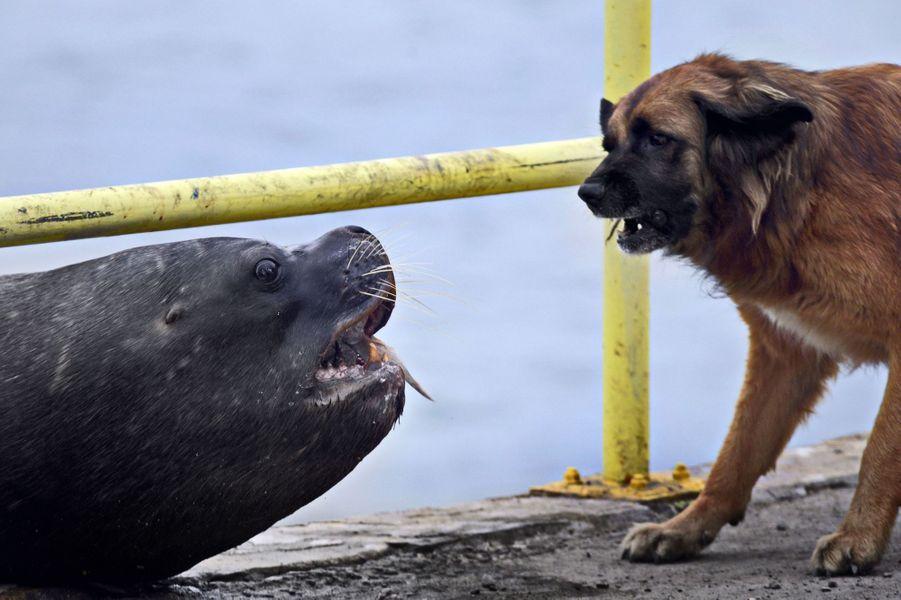 Un chien a tenté de voler à un lion de mer un poisson