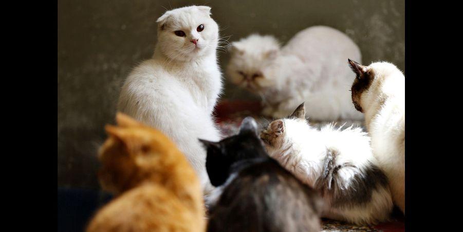 Maysoon et ses chats à Amman, en Jordanie
