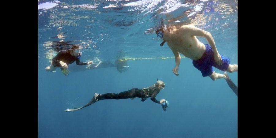 Dans l'eau d'Hawaï avec les requins