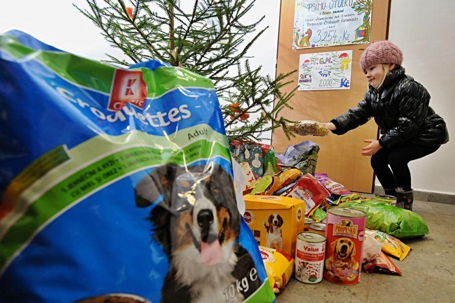 Noël en avance pour les chiens d'un refuge en République tchèque