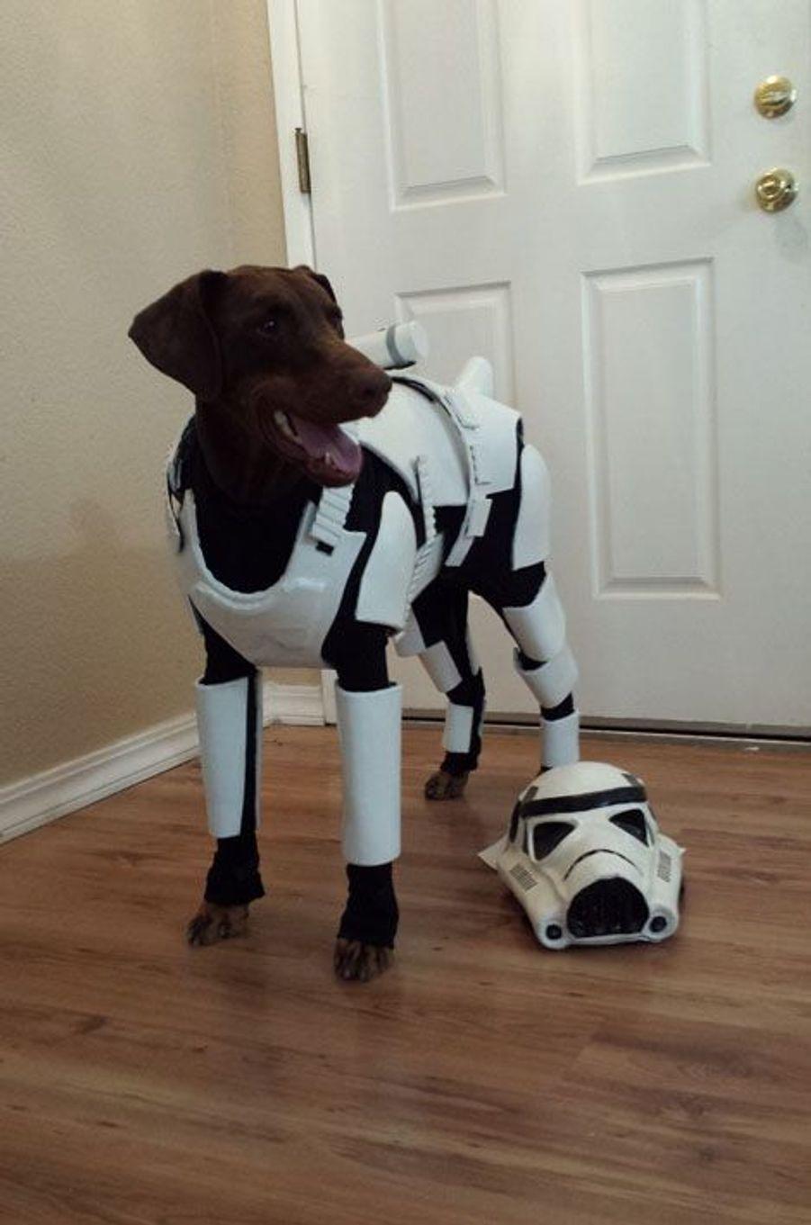 Penny, le soldat canin de l'Empire
