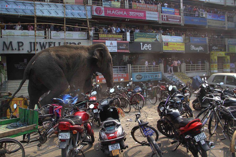 Perdu loin de sa forêt, l'éléphant sème la panique