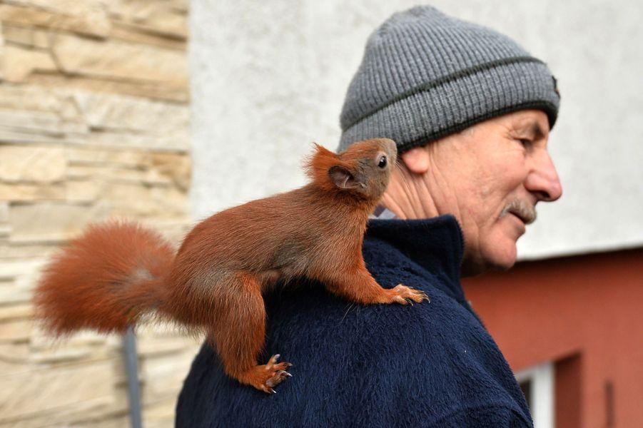Pitek l'écureuil domestiqué