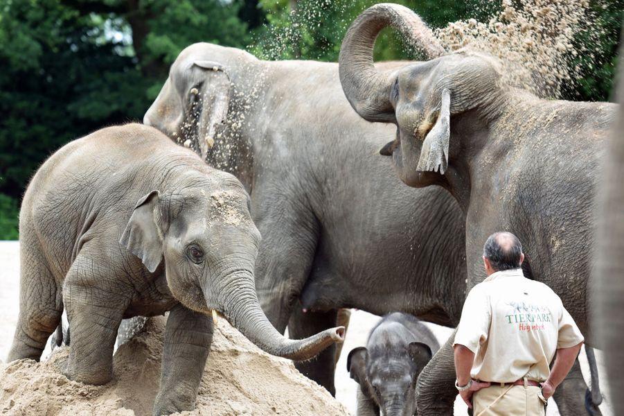 Première sortie pour Anjuli l'éléphant