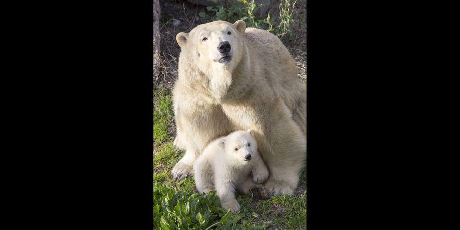 Flocke et son petit ourson au Marineland d'Antibes