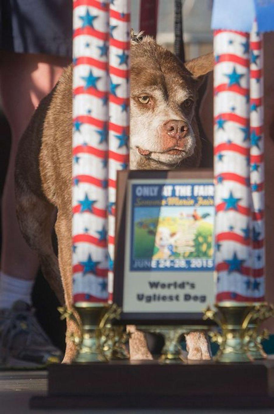 """Quasi Modo a été élu """"chien le plus laid du monde"""""""