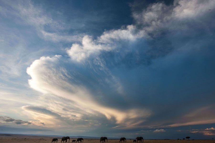 Ce 12 août marque la journée mondiale des éléphants, une espèce en danger