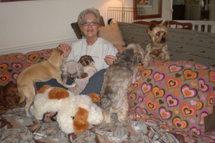 Sher a créé une maison de retraite pour chiens et chats