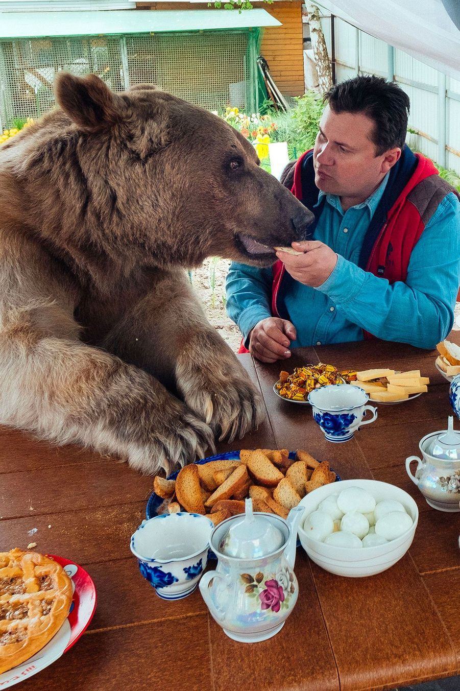 La famille Panteleeko mène la belle vie grâce à Stepan, leur ours de compagnie de 136 kilos.