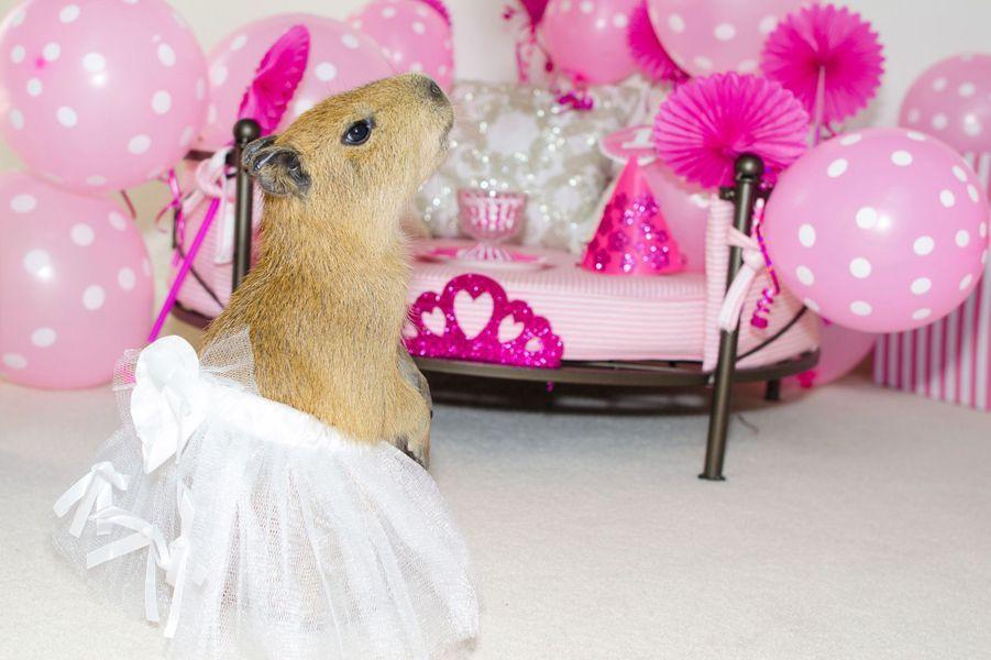 Sweetie le capybara coquet de Las Vegas