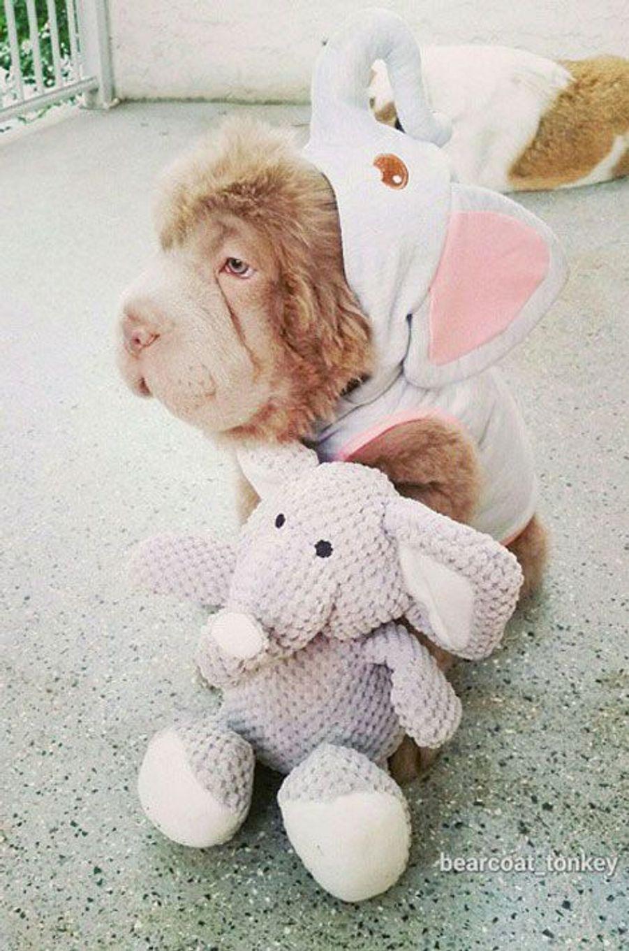 Tonkey, le chiot le plus mignon du monde