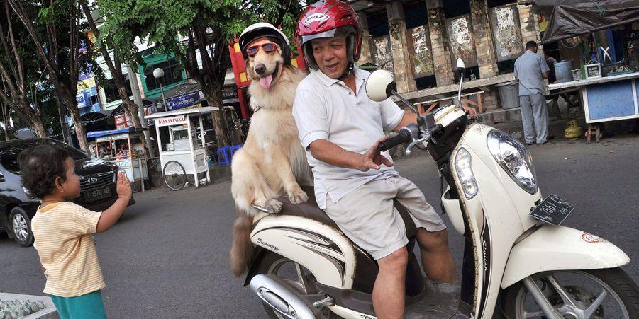Ace et Armani, les chiens qui aimaient faire du scooter