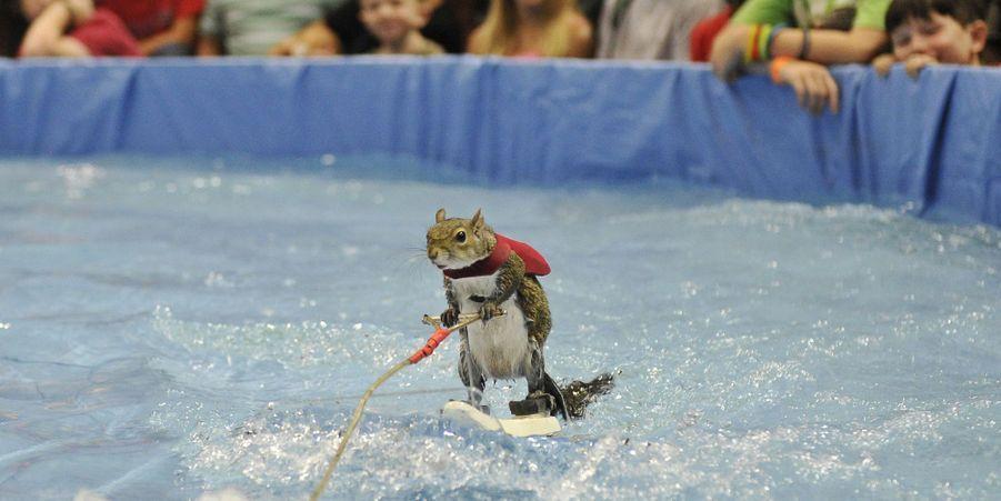Twiggy l'écureuil star du jet-ski aux X Games en juin 2015