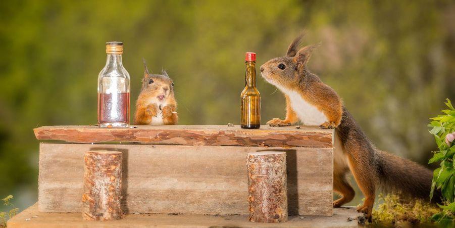 Un petit verre au bar des écureuils ?