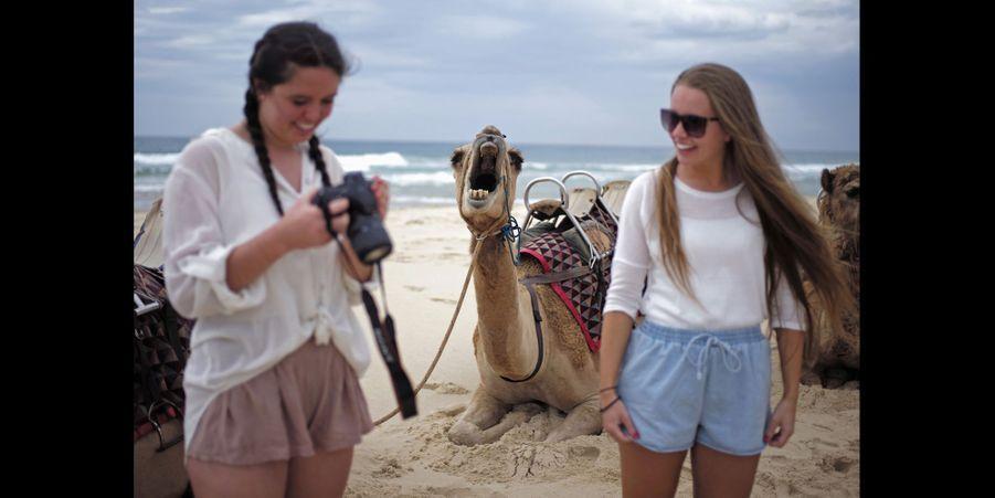 Sur une plage de Sydney, en Australie, un chameau a photobombé ces deux touristes