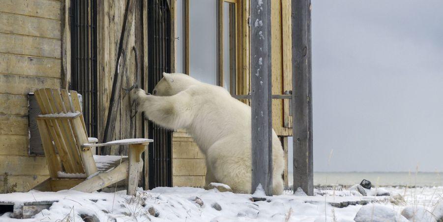 Attribuez une à cinq étoiles aux diaporamas de la semaine:Y a quelqu'un?:Prêt à venir pour le dîner, cet ours polaire n'a pas compris pourquoi ses hôtes ne lui ouvraient pas la porte de cette maison de Manitoba, au Canada.Copains comme cochons:Quand Steve Jenkins et Derek Walter ont adopté Esther, ils pensaient que cette cochonne garderait sa taille miniature. Seulement, Esther a grandi et grossi pour atteindre le poids de... 300 kilos.L'homme qui murmurait à l'oreille des requins:Après 10 ans de compétition, le plongeur de très haut niveau Fred Buyle a décidé de se consacrer à la photographie.Le phoque à l'abordage:Fatigué de nager, ce phoque a choisi de grimper à bord d'un bateau de pêcheur vide à Fremington, dans le comté de Devon, au Royaume-Uni.Naissance d'un petit gibbon:Les soigneurs du zoo de Saint-Pétersbourg, en Russie, surveillent attentivement le petit gibbon né le 8 février dernier.Le guépard qui ne craignait pas les chasseurs:Lors d'une partie de chasse avec deux hommes au sein de la réserve Naankuse (Namibie), ils ont été rejoints par un guépard pas effrayé par les chasseurs…Selfie chez les requins:Aaron Gekoski, un photographe de 34 ans, a pris ces clichés exceptionnels au sein du centre de plongée d'Aliwal Shoal, en Afrique du Sud.Les élégants portraits de Giacomo Brunelli:Le photographe italien Giacomo Brunelli a utilisé, en 2008, l'appareil photo de son père pour réaliser une série de portraits d'animaux à Rome.Les ours polaires, espèce menacée:Gravement touchés par le réchauffement climatique et la fonte des glaces, les ours polaires sont une espèce en danger.