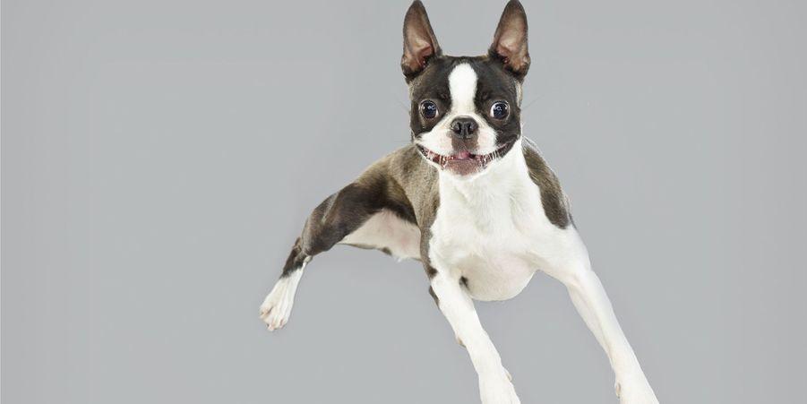 Air Dogs, les chiens volants
