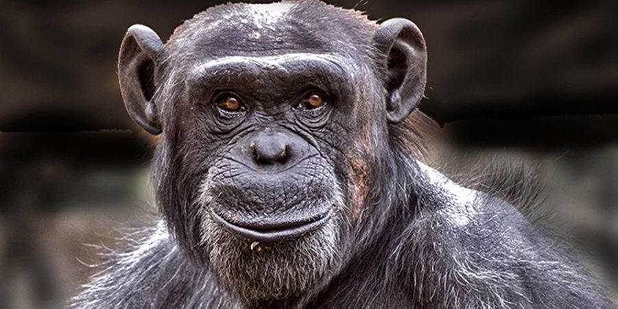 Attribuez une à cinq étoiles aux diaporamas Animal Story de la semaine:Moment de tendresse pour les jeunes guépards:Au Kenya, dans la réserve du Masai Mara,Iris Braun a capturé les images d'un moment de tendresse entre une guépard femelle et ses petits.Le chimpanzé souriant prend la pose: Un visiteur du zoo deZacango, au Mexique, a capturé le bel instant où un chimpanzé prend la pose et sourit.Les caïmans colorés d'Andrew McGibbon:Le photographe Andrew McGibbon a imaginé une séance photo dont les stars seraient des caïmans à lunettes.Festin sanglant pour le crocodile du Nil:Un crocodile du Nil a été photographié en train d'attaquer un zèbre dans la réserve nationale du Masai Mara au Kenya.Le brâme du cerf immortalisé:Un photographe a réussi à capturer les instants où les cerfs se mettent à brâmer au petit matin.Le héron fait fuir le canard:Le photographe Christopher Schlaf a immortalisé l'instant où un grand héron fait fuir un canard.Splendeurs et misères de la nature africaine:Le photographe britannique Gary Roberts a immortalisé une série de clichés bouleversants, montrant toute la beauté et toute l'horreur de la nature africaine.Le chant du lézard à collerette:Tranquillement installé sur une branche, ce lézard n'a rien de particulier. Mais lorsqu'il se sent en danger, il déploie sa collerette.Les chats stars du café:Dans le quartier new-yorkais de Brooklyn, les consommateurs se pressent au Cat's Meow, un café à chats qui leur permet de rester avec les félins pendant une demi-heure.Les termites photographient un puma:Le photographe animalier Jeff Cremer pensait que son appareil photo n'était pas récupérable.La petite lionne coincée dans une branche: En pleine escalade sur un arbre, elle s'est coincée une griffe dans une branche.Pip l'adorable petit wallaby élevé à la main:Au lieu de finir sa croissance dans la poche de sa mère, le petit marsupial a dû être élevé dans un sac en coton, et nourri à la main par les soigneurs du Night Safari de Singapour.