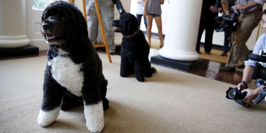 Attribuez une à cinq étoiles aux diaporamas Animal Story de la semaine:Une année avec Bo et Sunny, les chiens des Obama:La Maison-Blanche a deux locataires supplémentaires qui se baladent dans les couloirs: Bo et Sunny. Les chiens du couple Barack et Michelle Obama, qu'ils ont adoptés en 2009 et 2013, sont deux chiens d'eau portugais.Les koalas hydratés à la gourde:La semaine dernière, la chaleur était étouffante en Australie. Elle était même trop sévère pour les koalas d'Adelaide, où certains habitants ont aspergé les petits animaux d'eau.Wesley le chaton pirate:Ce chat né avec un seul œil a été adopté par Rheanne Charise Taylor, une jeune femme de 27 ans qui vit dans l'Iowa.Les 10 quokkas euphoriques repérés sur Pinterest:Les quokkas sont certainement les animaux les plus heureux du monde entier : ils affichent toujours un large sourire et vivent paisiblement en famille.Les éléphants stars au Népal:En cette fin de mois de décembre, la région de Chitwan, au Népal, a accueilli le 12ème festival annuel des éléphants, à Sauraha.Soleil et neige, la belle vie pour ce petit phoque:Le photographe Gunther Riehlea eu la chance de pouvoir s'approcher de très près d'un petit phoque lors d'une visite sur une des îles de la Madeleine.Le lion se débarrasse de la pluie... sans égard pour la lionne:Durant une importante chute de pluie au sein de l'aire de conservation du Ngorongoro, en Tanzanie, ce mâle n'a pas hésité à se secouer la tête pour se débarrasser des gouttes de pluie, sans égard pour la lionne.Retour à la nature pour les hurleurs roux:A Armenia Mantequilla, en Colombie, neuf hurleurs roux ont retrouvé la liberté, pour le plus grand plaisir des spécialistes qui se sont occupés d'eux.