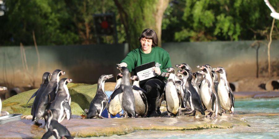 Attribuez une à cinq étoiles aux diaporamas Animal Story de la semaine:La quinceañera d'Angel le caniche: Groupe de mariachis, piñata à l'effigie du héros du jour, invités triés sur le volet et gâteau sur mesure, Angel a fêté son anniversaire comme un chien pourri gâté à Phoenix, dans l'Arizona.L'heure de l'inventaire a sonné au zoo de Londres:Au cours de cet événement ouvert à la presse, les soigneurs du parc ont compté les quelque 750 espèces présentes au sein du parc, des méduses aux lémuriens, en passant par les reptiles.15 félins exceptionnels repérés sur Pinterest:Les tigres, les lions, les guépards et les léopards blancs sont majestueux et souvent vénérés dans leurs pays comme étant des animaux sacrés et royaux.Sweetie le capybara coquet:A première vue, les capybaras ne sont pas forcément les animaux les plus glamours auxquels on peut penser.Le zébreau, premier né de l'année à Dvur Kralove:Le zoo deDvur Kralove, en République tchèque, a accueilli sa première naissance de l'année 2016.Naruto le singe n'a pas de droits sur ses selfies: Un juge de San Francisco a décidé que le singe Naruto n'avait pas de droits sur un selfie pris en Indonésie.Le pantalon pour chiens, il fallait oser:Tous les propriétaires de chiens savent bien qu'après une balade dans une rue ou un parc mouillé, le meilleur ami de l'Homme passe par la case essuyage.