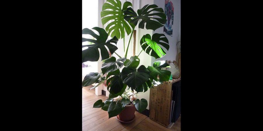 plante interieur pinterest