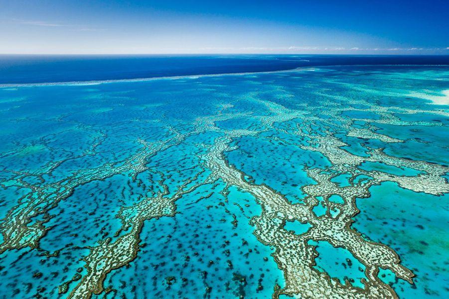 La Grande Barrière de Corail, en Australie, est le plus vaste récif corallien de la planète. Elle abrite près de 3 000 récifs et s'étend sur 350 000 km².
