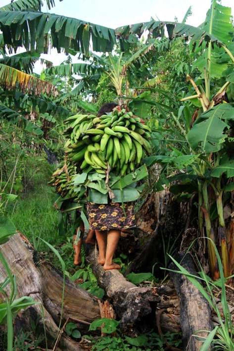 Les Matsés cultivent une large variété de plantes comestibles dans leurs jardins, dont la banane-plantain et le manioc, leur nourriture de base.«Nous ne consommons pas de nourriture industrielle, nous n'achetons rien. C'est pourquoi nous avons besoin d'espace pour cultiver notre propre nourriture», dit Antonina Duni, une femme matsés.
