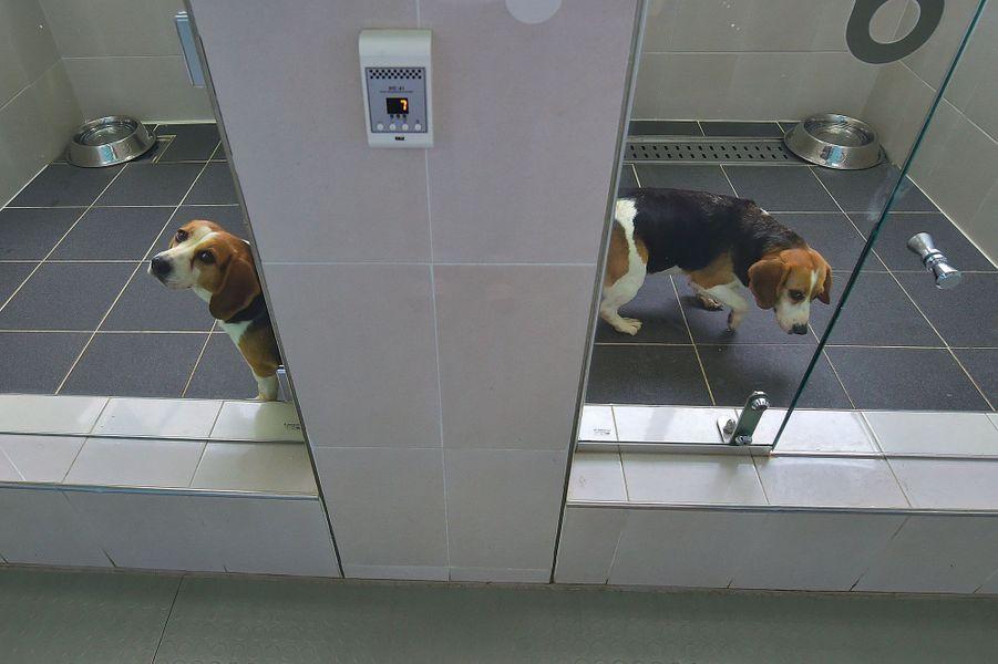 """""""Avec le clonage, on a une chance de faire revivre les animaux"""""""
