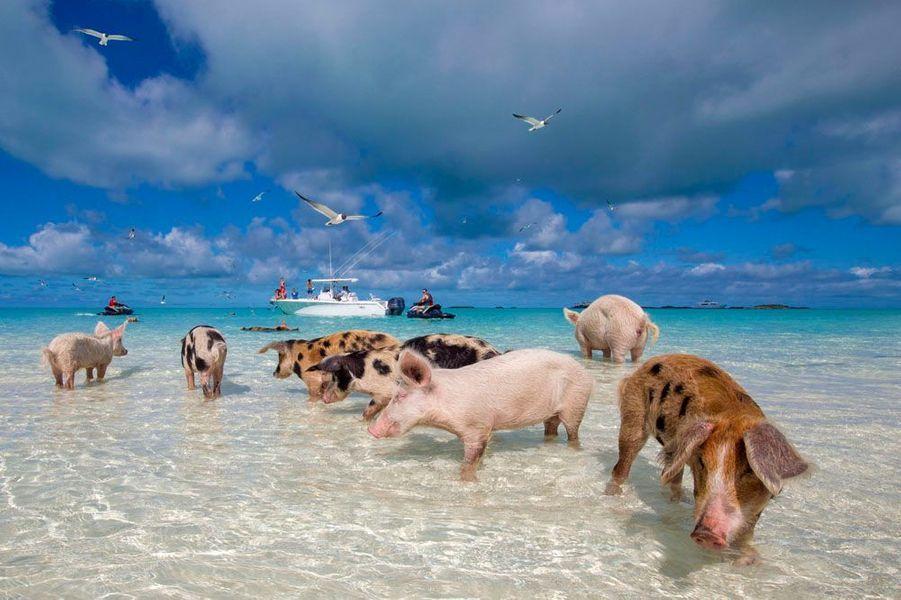 la-baie-des-cochons