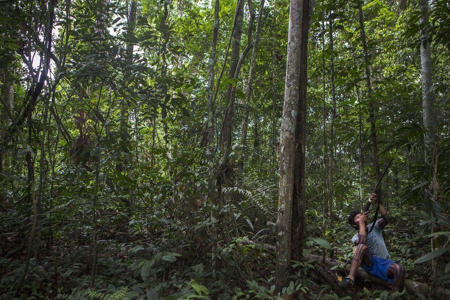 Les voyages de chasse sont faits dans le calme avec de nombreux arrêts pour écouter le gibier. Les chasseursexpérimentés peuvent reconnaître et imiter de nombreux sons d'animaux.