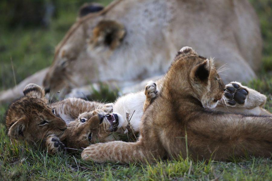 Au sein de la Réserve naturelle du Masai Mara