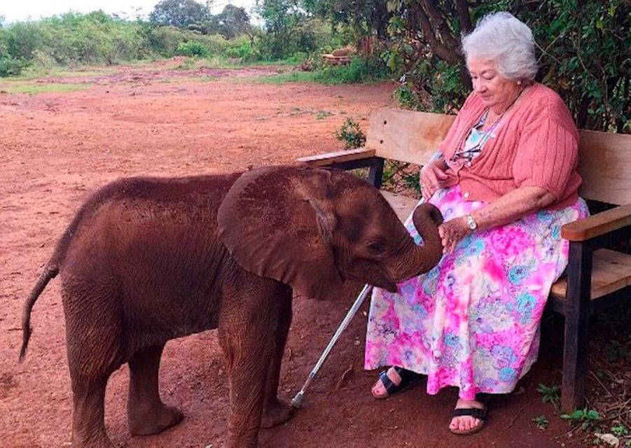"""""""David Sheldrick Wildlife Trust"""" accueille les éléphanteaux orphelins"""