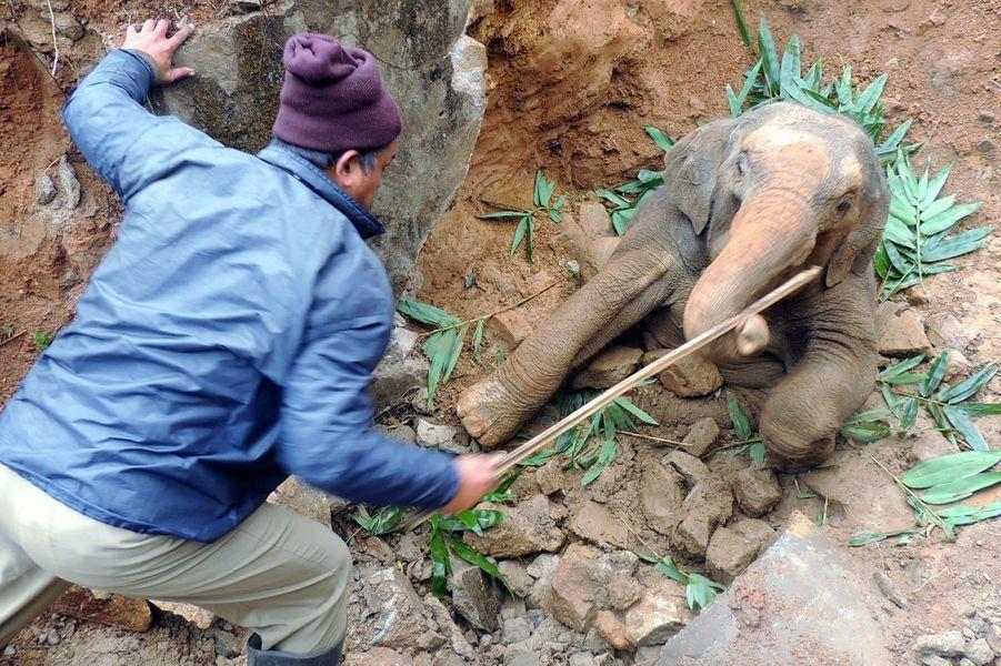 Heureux dénouement pour un éléphanteau tombé