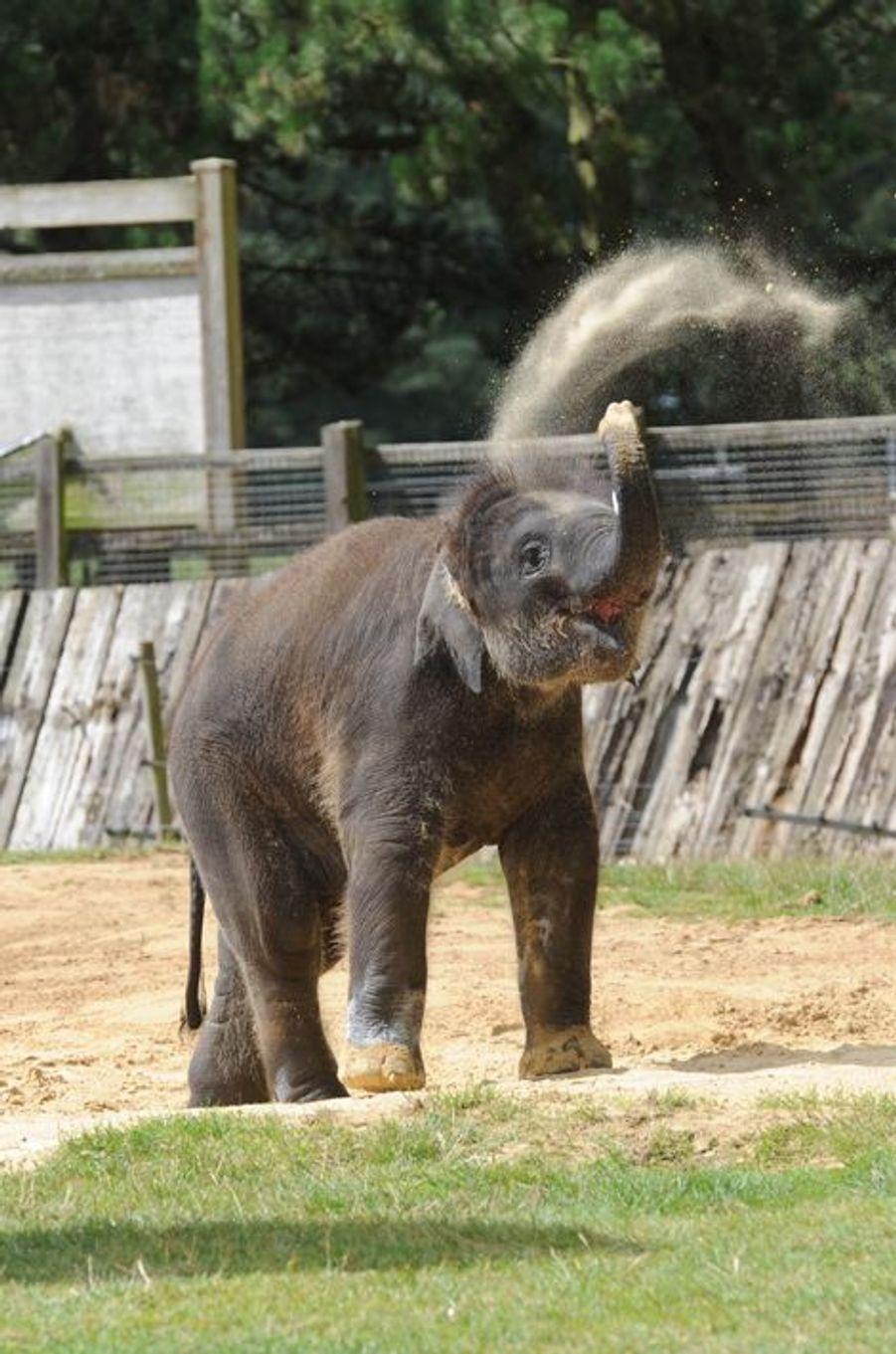 Instant fraîcheur pour Max l'éléphanteau