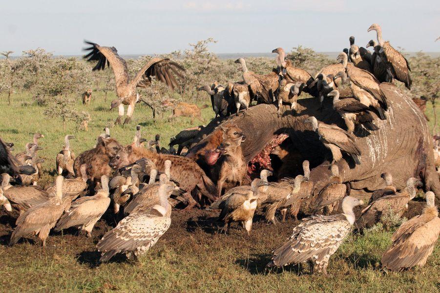 Cache-cache ensanglanté au Kenya