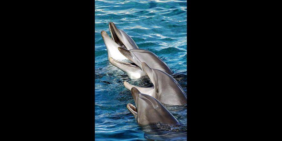 Ces dauphins sont carrément euphoriques. (voir l'épingle)Suivez nous sur Pinterest !