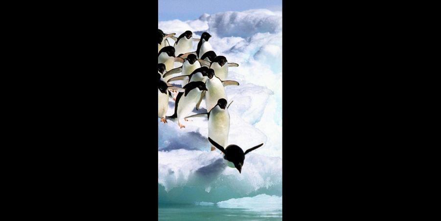 Un par un, les manchots prennent leur élan pour sauter à l'eau. (voir l'épingle)Suivez nous sur Pinterest !