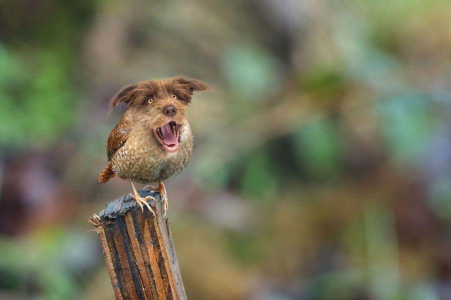 Le oiseau-chien