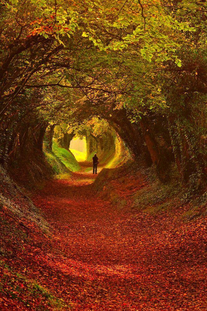 """Dans le """"South Downs National Park"""", au sud du Royaume-Uni (Sussex de l'Ouest)."""