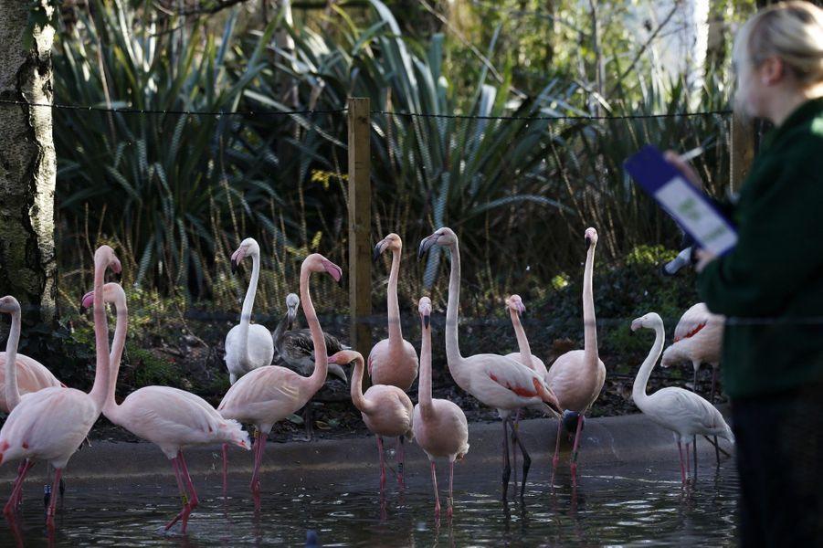 Au Zoo de Londres