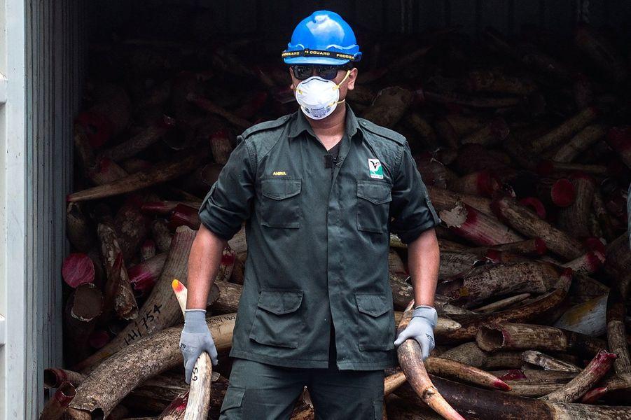 Pour la première fois, la Malaisie brûle son ivoire de contrebande