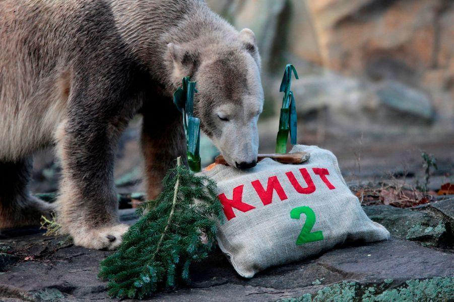 LaKnutmania a battu son plein pendant les cinq ans de la vie de l'ours blanc Knut, né en 2006 au zoo de Berlin. Premier ours blanc à naître dans l'établissement en 30 ans, il a attiré des milliers de visiteurs jusqu'à devenir une marque déposée.