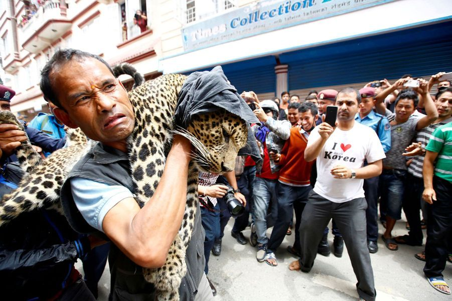 Un léopard sauvage sème la panique à Katmandou