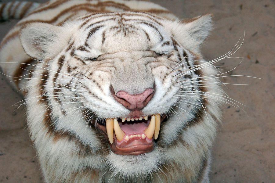 Vivre avec les tigres